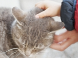 Stroking a cute cat